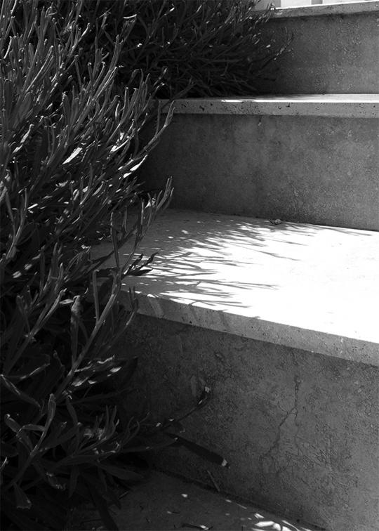 proiecte pentru gradini naturale